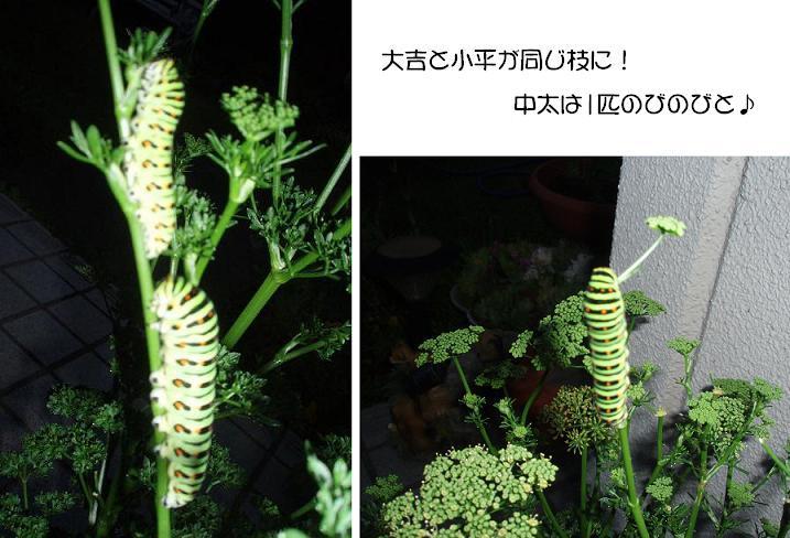 f0101679_19404443.jpg