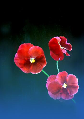 花。_b0133890_23842.jpg