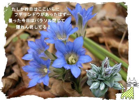 f0137096_08142.jpg