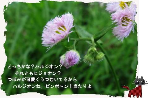 f0137096_093133.jpg