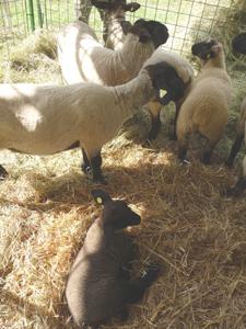 農業祭りで再会♪_f0106597_38831.jpg