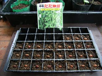 豆・豆・豆_c0063348_13491578.jpg