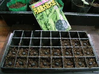 豆・豆・豆_c0063348_1349174.jpg