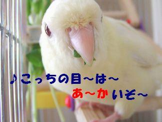 b0082757_0143580.jpg