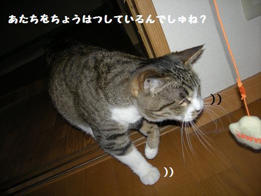 f0081100_2241543.jpg