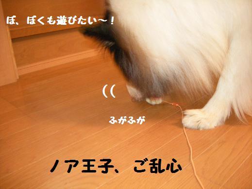 f0081100_22422983.jpg