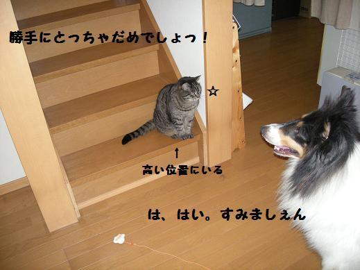 f0081100_2243347.jpg