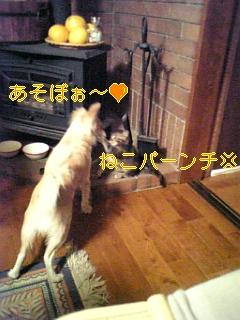 松本つづき_f0148927_18275326.jpg