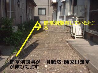 f0031037_1650153.jpg