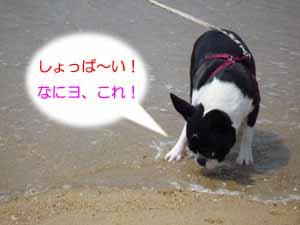 f0166359_22491013.jpg