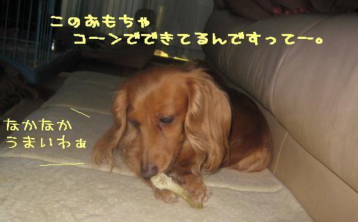 d0146270_2505970.jpg
