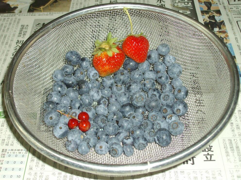 ブルータの収穫_f0018078_13163885.jpg