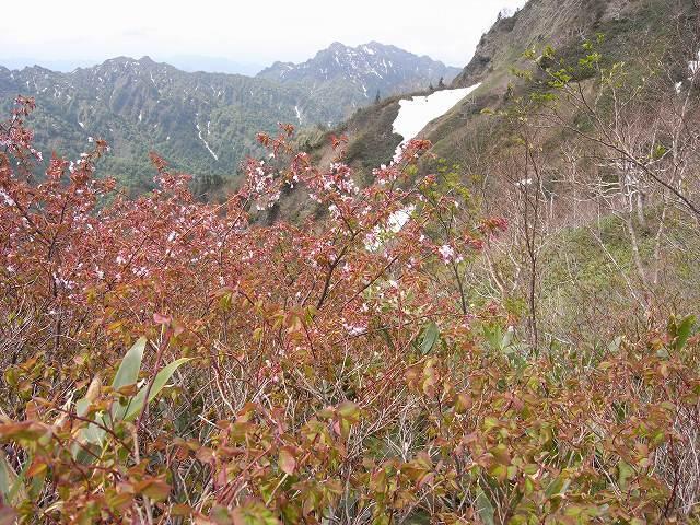 6月7日、高妻山に登る_f0138096_16371651.jpg