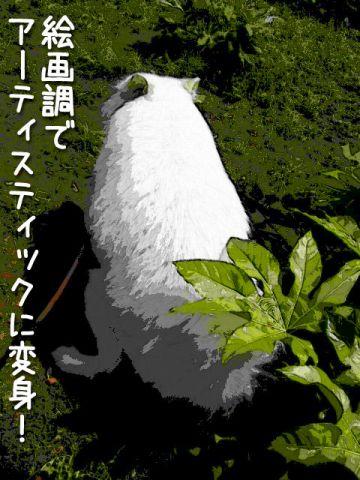 FinePix Z20fdモニター♪黒岡助手 _c0062832_200211.jpg