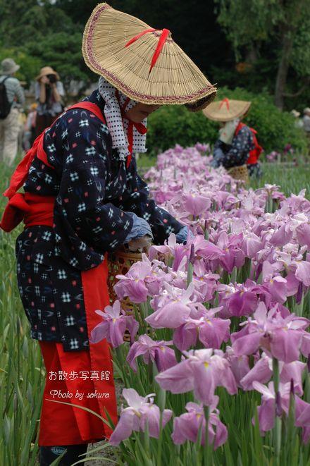 花摘み_c0104344_7564693.jpg