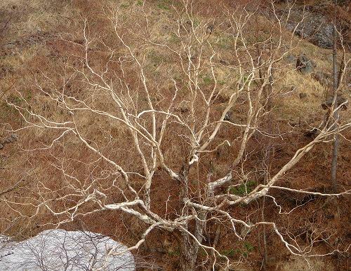 <2008年5月17日> 世界有数の活火山「浅間山」に登る_c0119160_00591.jpg