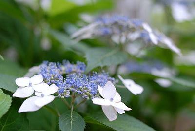 庭が_b0142265_12515230.jpg