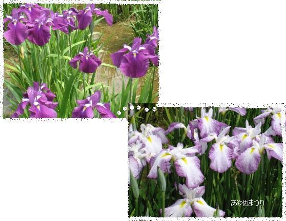 f0171002_11424384.jpg