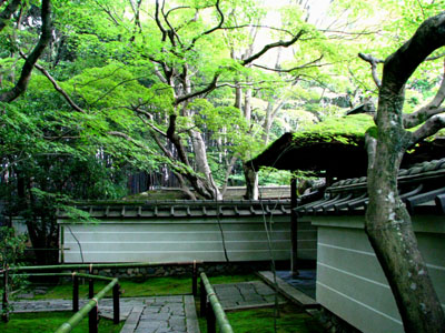 高桐院(大徳寺)_e0048413_21312615.jpg