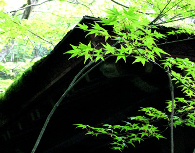 高桐院(大徳寺)_e0048413_21314149.jpg