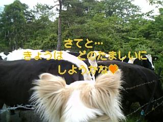 f0148927_17183788.jpg