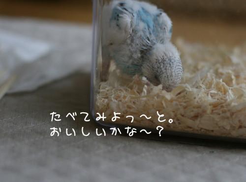 b0143835_1623328.jpg