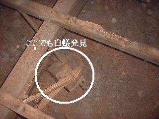 f0031037_1819101.jpg