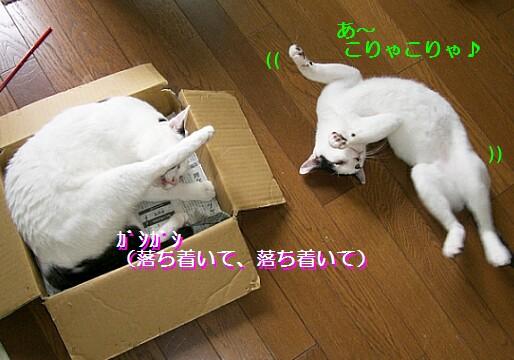 b0024945_17102970.jpg