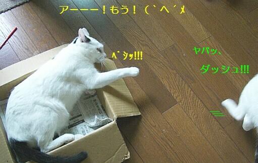 b0024945_1712275.jpg