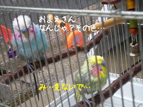 f0132055_954933.jpg