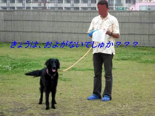 a0104464_1532179.jpg