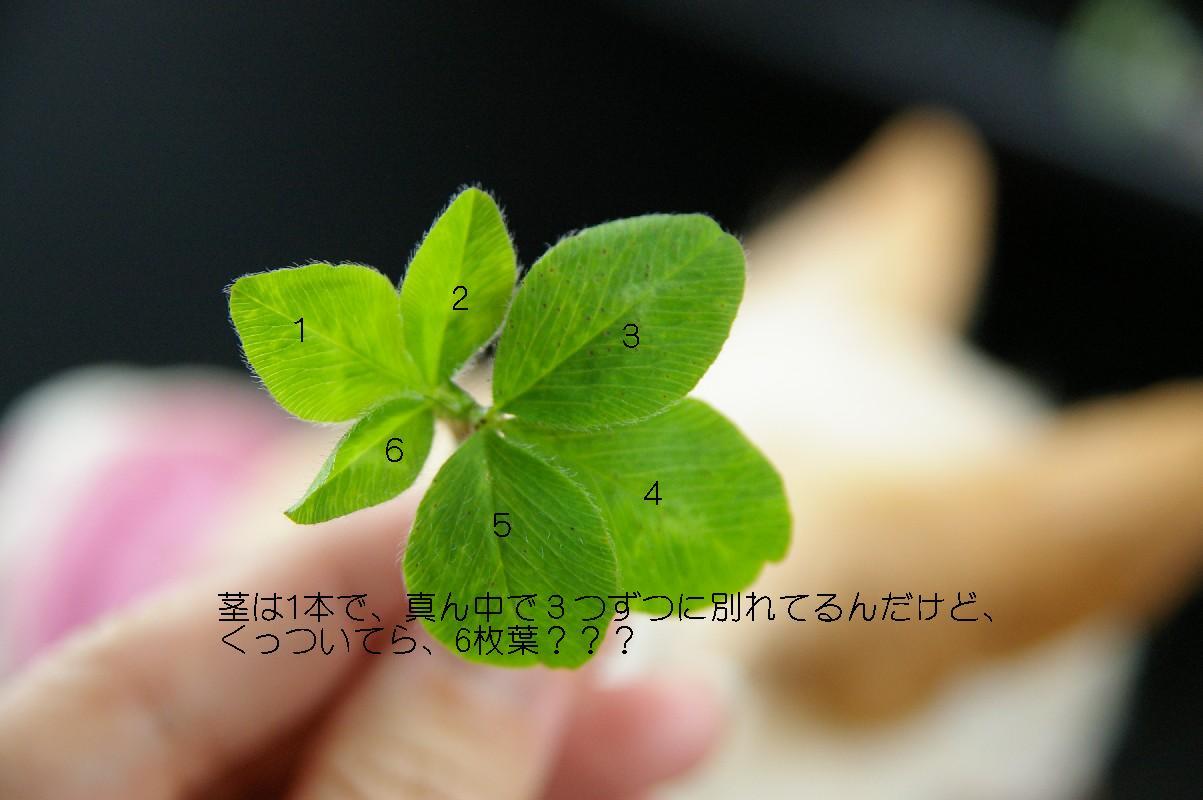 f0152674_16231931.jpg