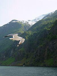 フィヨルドの美しい風景(6/2)_e0022175_2204219.jpg
