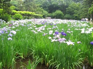 小石川後楽園_a0091095_12354077.jpg