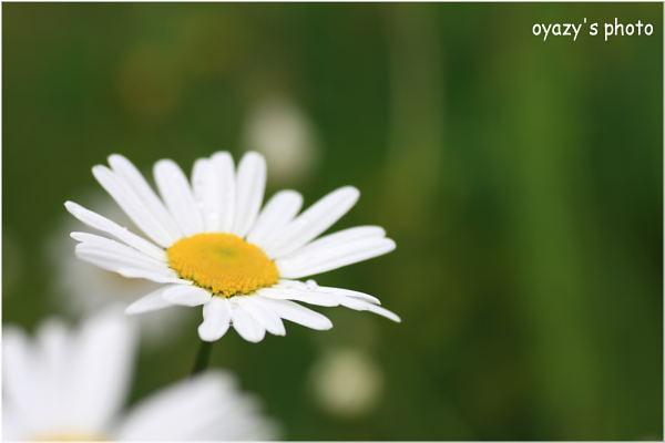 野に咲く_a0071514_2334467.jpg