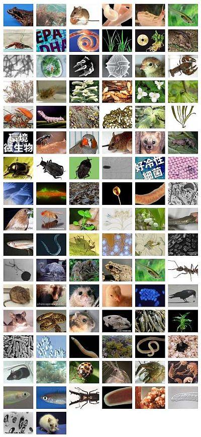 生物科学科ホームページ刷新 【テスト運用中】_c0025115_21594712.jpg
