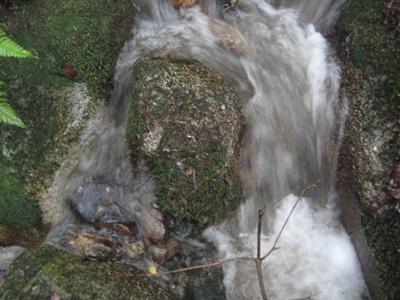 椎茸山の大水_b0100062_19483721.jpg