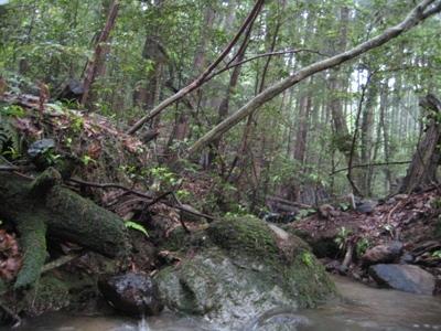 椎茸山の大水_b0100062_1949965.jpg