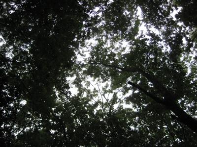 椎茸山の大水_b0100062_19504687.jpg