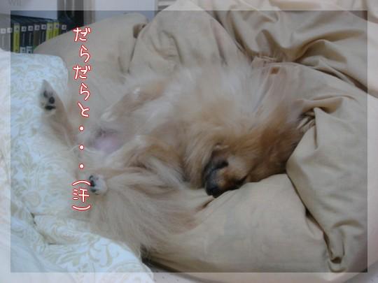 b0078073_14171331.jpg