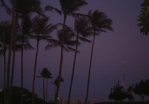ハワイで撮った写真_a0033881_140841.jpg