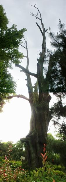 京都に行く―渉成園その1―_c0129404_1341121.jpg