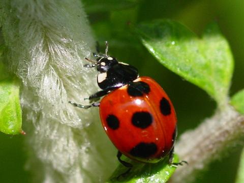 画像 : てんとう虫・画像など - NAVER まとめ