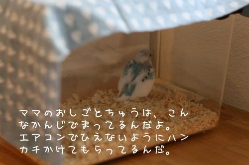 b0143835_16222837.jpg