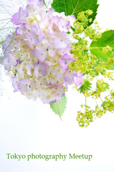 6月の撮影会おしらせ_a0003650_9301848.jpg