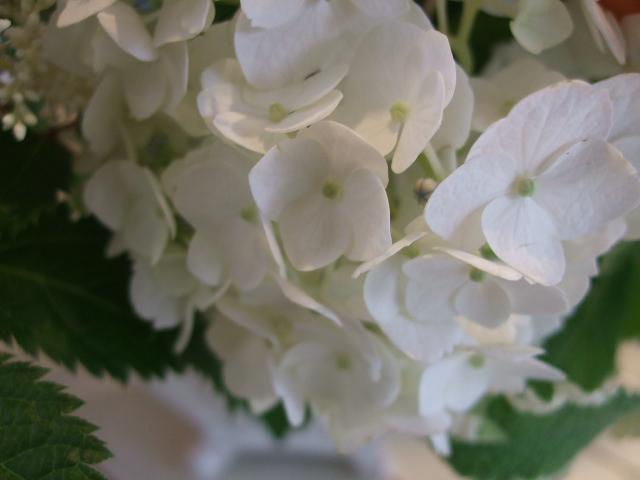 オークリーフ花の教室(川嶋さんの作品)_f0049672_1634795.jpg