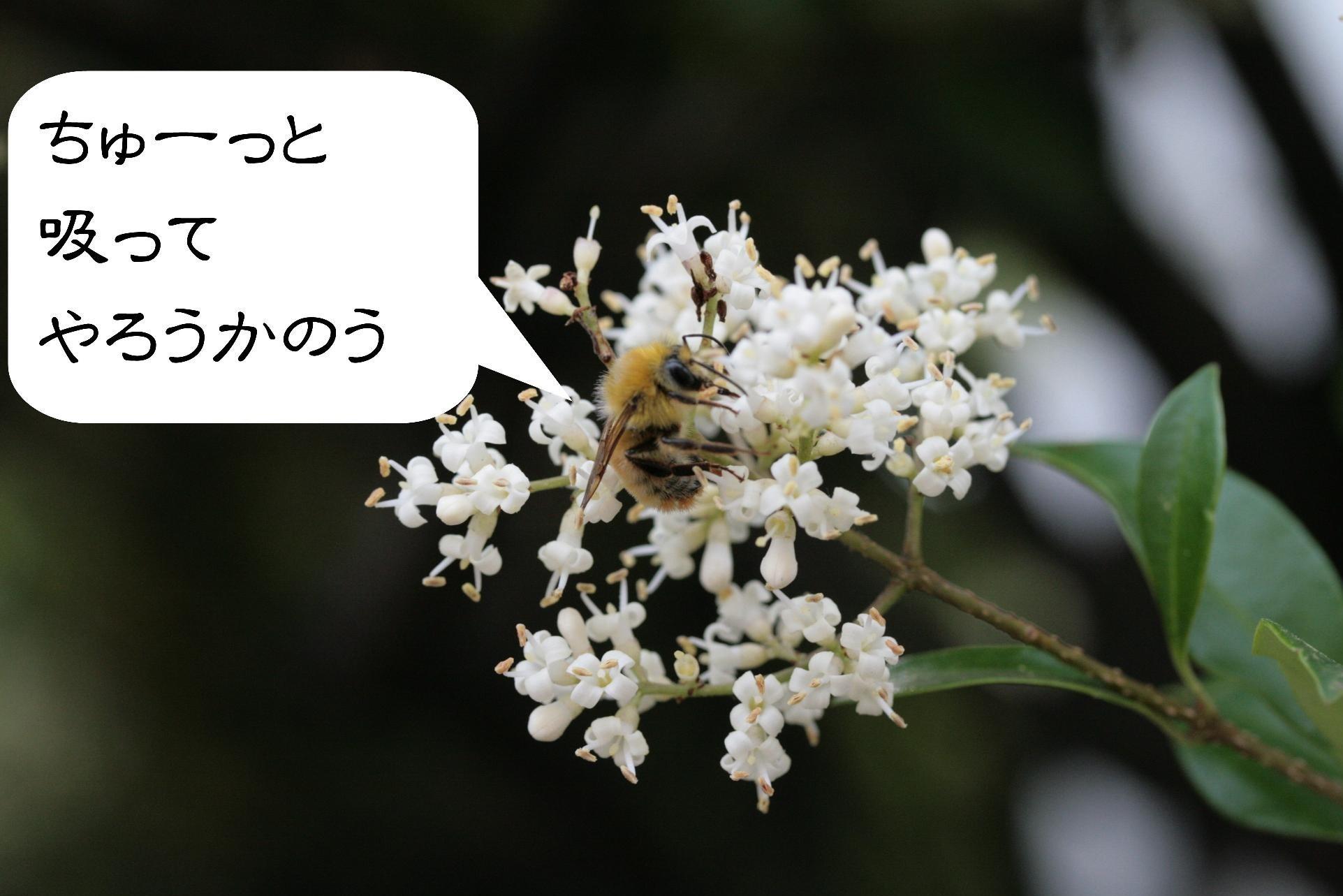 d0133693_2191855.jpg