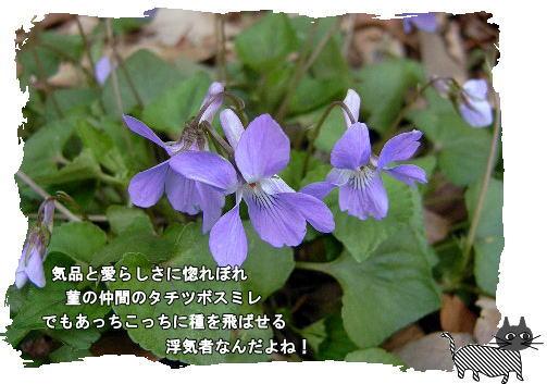 f0137096_196524.jpg