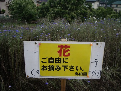 『 花ご自由にお摘み下さい 』_c0124100_14481163.jpg