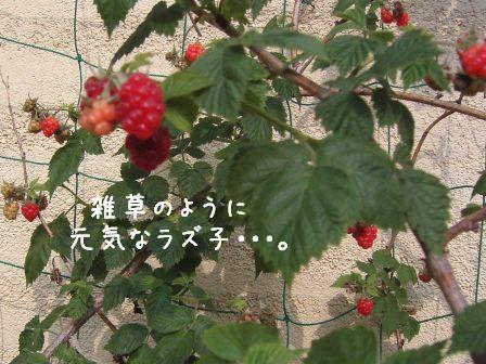 f0068501_22202889.jpg